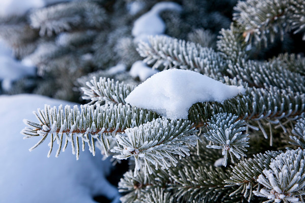 Hoar Frost in Lake Geneva