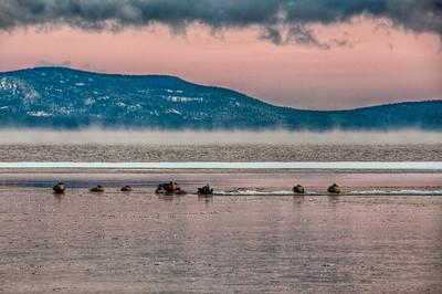 lake-geese