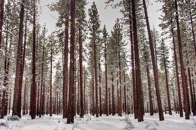 snowy-woods-2-2