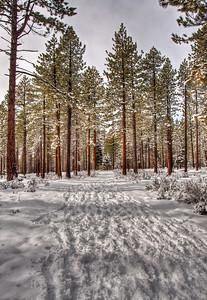 snowy-woods-path