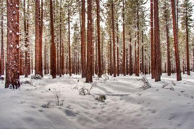 snowy-woods-2