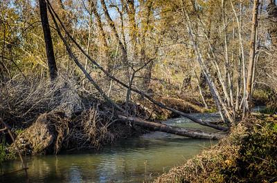 A Walk Along Willow Creek