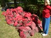 """Bags of sand & gravel and Eurasian milfoil dredged from lake during """"milfoil"""" removal - Waccabuc lake"""