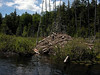 Little Polliwog Pond - beaver lodge