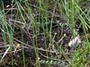 Little Polliwog Pond