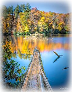 Lake Balsam Fallen Tree - white vignette