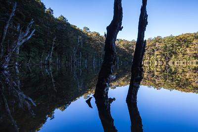 Tree trunks in tarn, Mount Richmond Forest Park