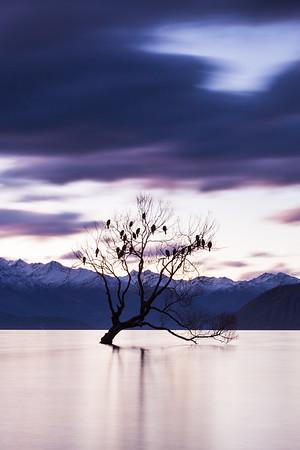 Winter willow tree (Wanaka Tree), Lake Wanaka