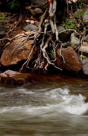 Creek - T-Cross Ranch, Dubois, WY