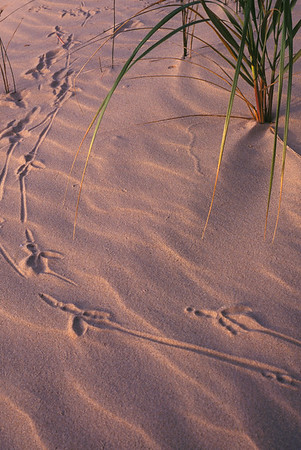 Gull Tracks in the Morning Light - Lake Michigan