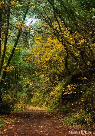 Lagunitas Creek Trail