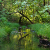 Cascade Creek April Morning