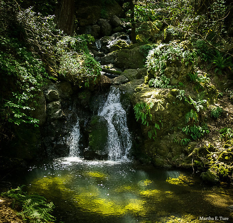 Waterfall, Cataract Trail, Mt. Tamalpais