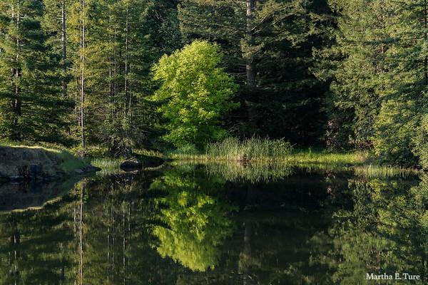 Lake Lagunitas Stream