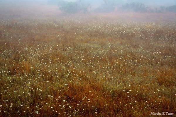 Mist on Meadow, Mt. Tamalpais