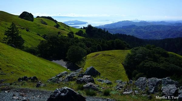 Spring Morning on Mt. Tamalpais