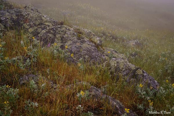 Foggy Mountain Meadow