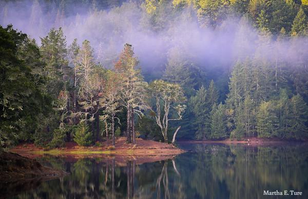 Pine Point With Mist