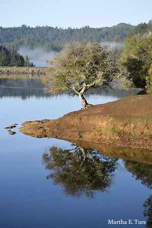 Live Oak and Lake Bon Tempe