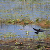 "Lakes in a New Light: Jevin, 16 - ""Flight"""