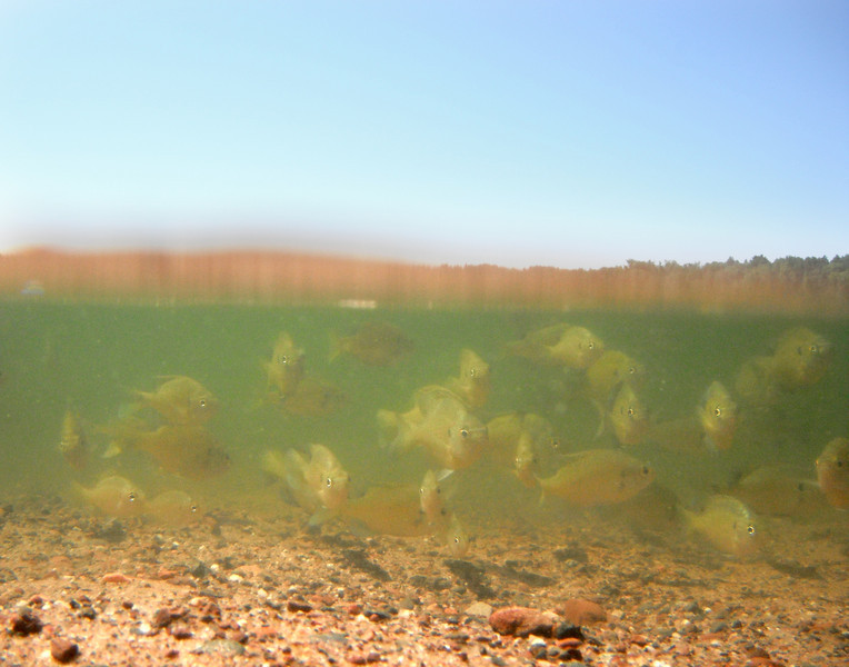 "Lakes in New Light: Jordan, 17 - ""Bluegill Army"""