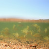 "Lakes in New Light: Jordan, 17 - ""Bluegill Army"""