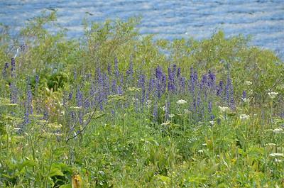 Trip To Blue Lakes 2014-07