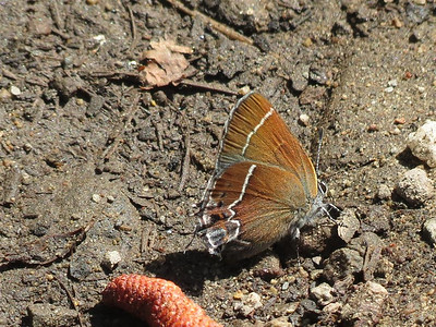 P00022_Brown_Butterfly