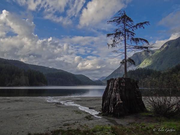 Buntzen Lake Tree Dark