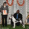 Best 4-6 mo puppy