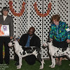 Best 4-6 mo Puppies