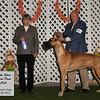 Winners Dog 10-6-12