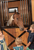 2019-06-14 Lakeside Stables Grand Opening kbd_2426