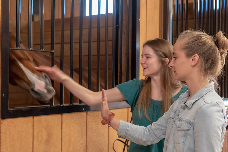 2019-06-14 Lakeside Stables Grand Opening kbd_2425