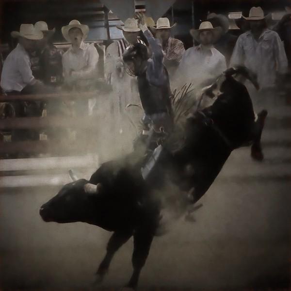 Bull Rider Photo Painting Topaz KC 4.19.jpg