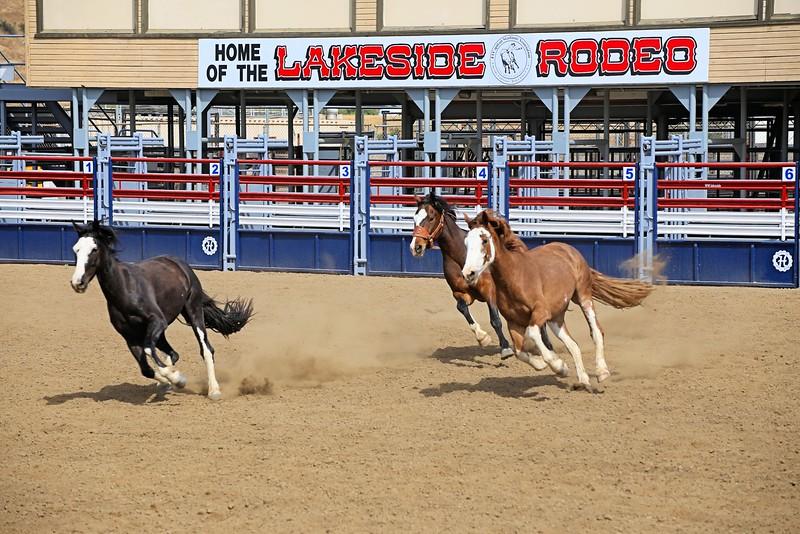 Lakeside Rodeo_3 Broncs_Susie_2015 _ Racing Across Sign.jpg