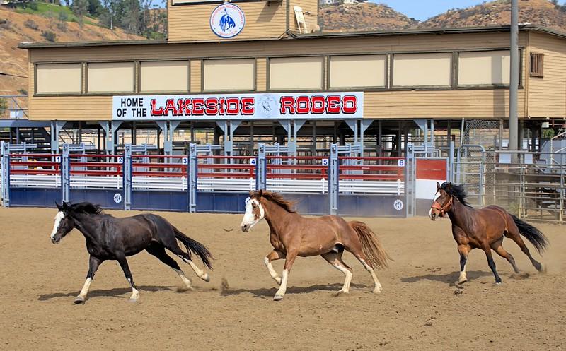Lakeside Rodeo_3 Broncs_Susie_2015.jpg