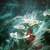 0855 Disneyland - 20000 Leagues under the sea (2)