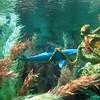 0870 Disneyland - 20000 Leagues under the sea (9)