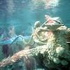 0865 Disneyland - 20000 Leagues under the sea (4)
