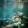 0875 Disneyland - 20000 Leagues under the sea