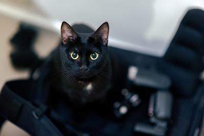 Cat on Camera Bag