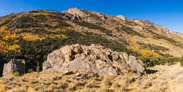 Aspen in Fall Colors in Lamoille Canyon