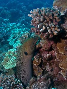Lanai Diving