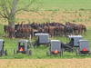 amish horses at church 005