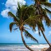 West Coast, Barbados
