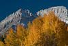 Fall on the Eastern side of Sierra Nevada Range