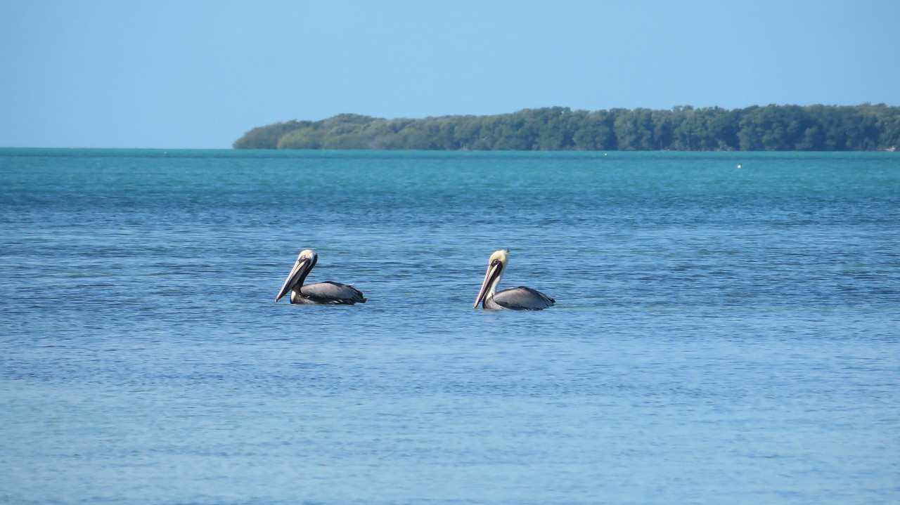 "We started calling all the pelicans Nigel in honor of the pelican in ""Finding Nemo"""
