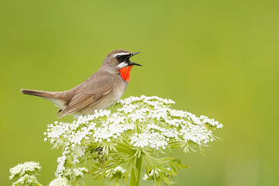 Birds of North Hokkaido