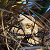 Owlet Sees the World